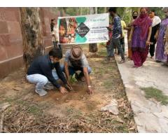 Silverline  Foundation  Plantation Drive