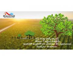 22 Cents Sandalwood Plantation 7 Lakhs Only In Prakasam District